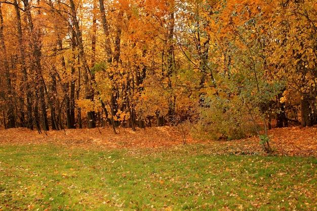 ロシアの地面に木々と黄色の紅葉の森の美しいショット 無料写真