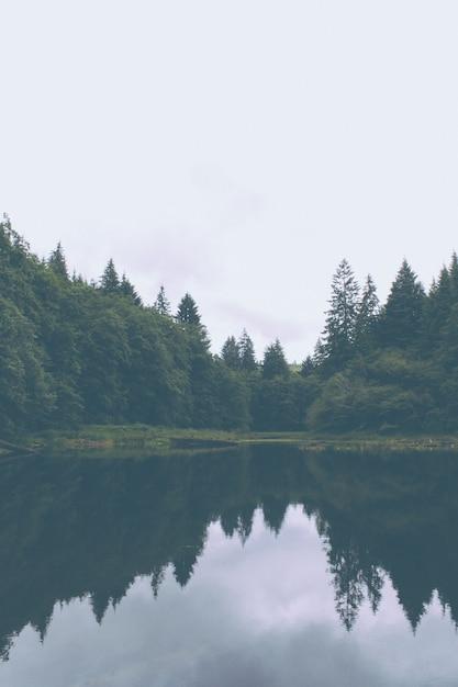 Красивый снимок озера и сосны форрест Бесплатные Фотографии