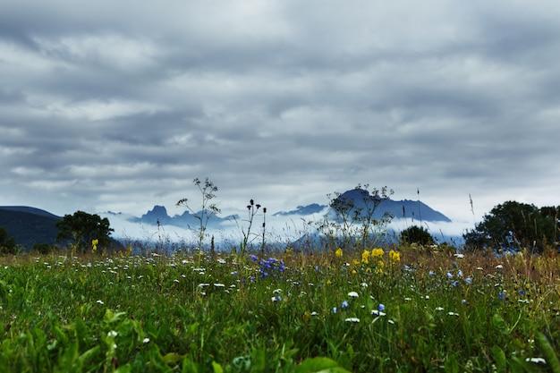 Красивые пейзажи зеленого поля с полевыми цветами в окружении красивых гор Бесплатные Фотографии