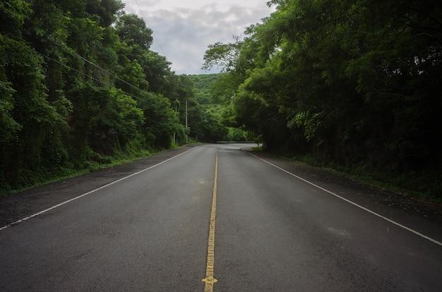 Красивая съемка пустой дороги посреди леса Бесплатные Фотографии