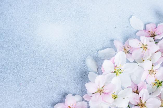 Красивые цветы яблони на синем фоне Premium Фотографии