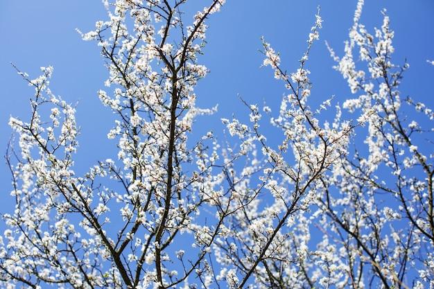 Ветви дерева против неба. весенний фон Premium Фотографии