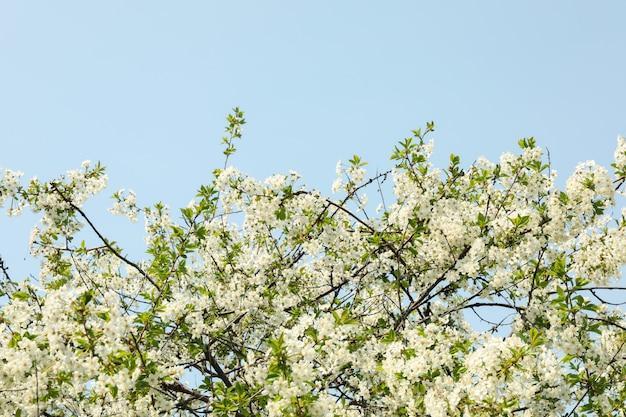 春に咲く庭、咲く春の木。晴れた春の日 Premium写真