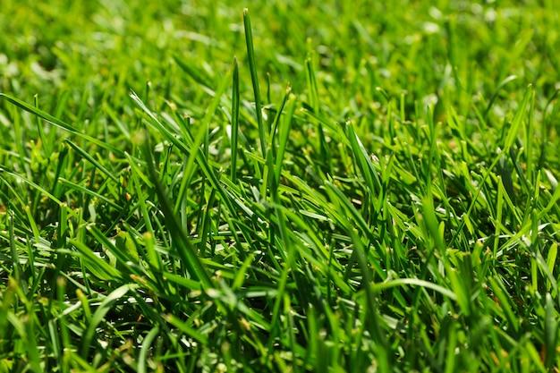 Текстура свежей зеленой травы. естественный фон, крупным планом Premium Фотографии