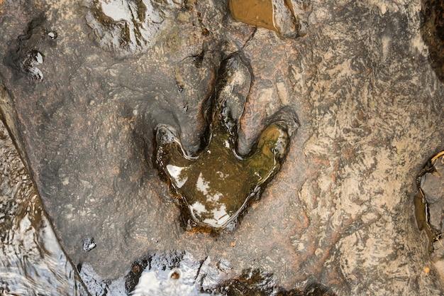 フー・ファーク国立森林公園、カラシン川の近くの地面にある恐竜の足跡 Premium写真