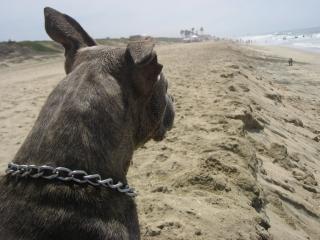 Открыть собак Бесплатные Фотографии