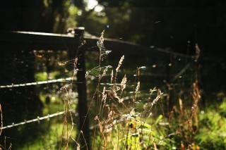 ファーム自然 無料写真
