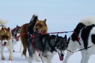 Маутейн ездить с лаек, зимой Бесплатные Фотографии