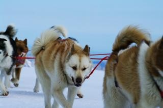 Маутейн ездить с лаек, кататься, снега Бесплатные Фотографии