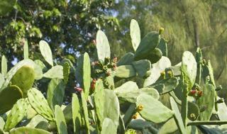 緑のサボテン、背景 無料写真