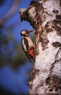 鳥、木 無料写真