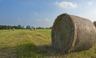 Ферма, сена Бесплатные Фотографии
