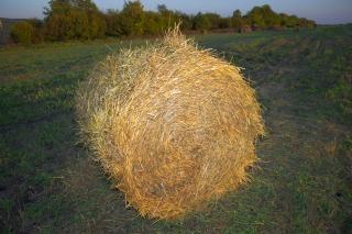 干し草、自然 無料写真