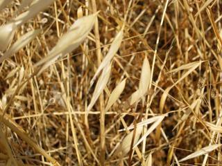 干し草農業 無料写真