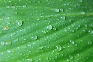 雨の後の大きな葉 無料写真