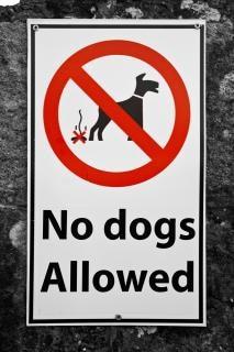 ない犬は白にサイン許されない 無料写真
