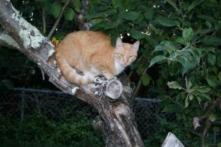 Табби в дерево Бесплатные Фотографии
