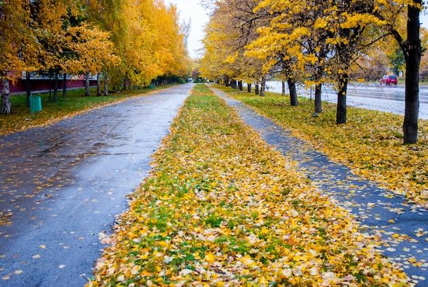 Осенние дождливые трассы с желтыми листьями Premium Фотографии