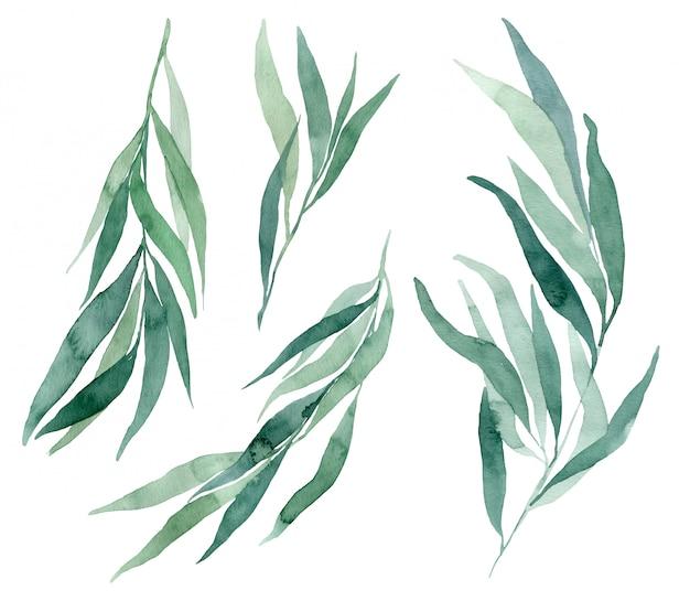 白い背景の水彩イラストユーカリの枝のセットです。結婚式の招待状やエコスタイルのカードを作成するための要素。 Premium写真