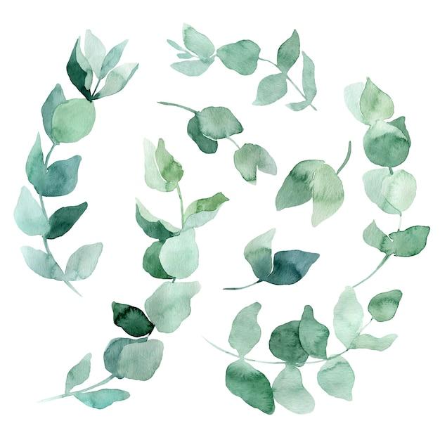 水彩イラストユーカリの枝のセットです。結婚式の招待状やエコスタイルのカードを作成するための要素。 Premium写真