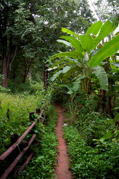 Трейл в лесу, таиланд Premium Фотографии