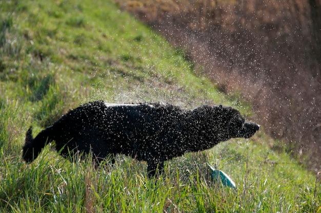 Собака, играющая на краю воды Premium Фотографии