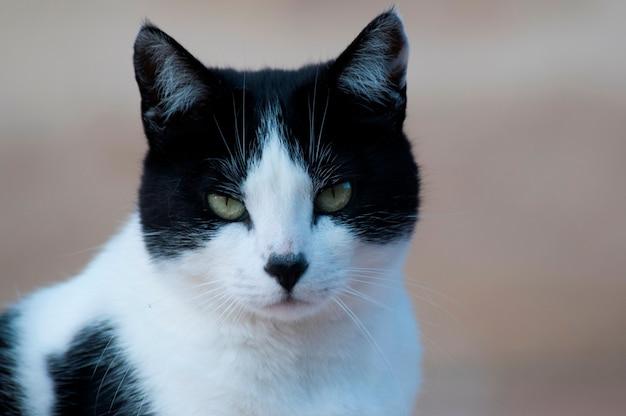 猫 Premium写真