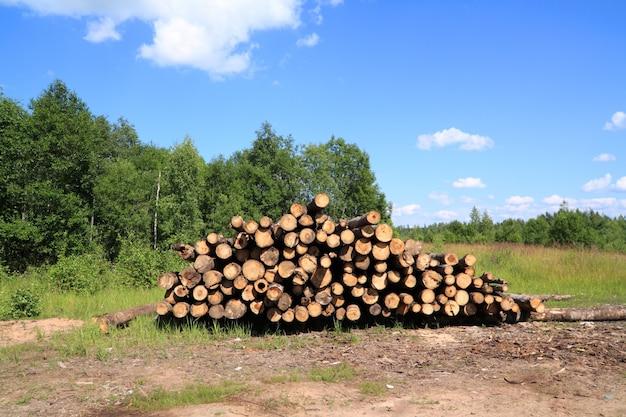 木を挽き Premium写真