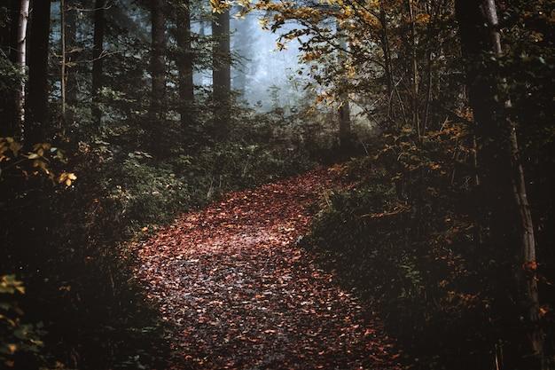 Осенний лес с сухими листьями Бесплатные Фотографии