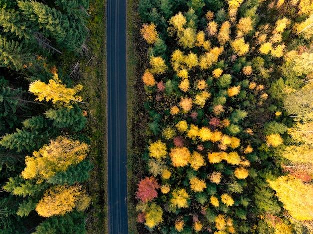 Аэрофотосъемка леса Бесплатные Фотографии