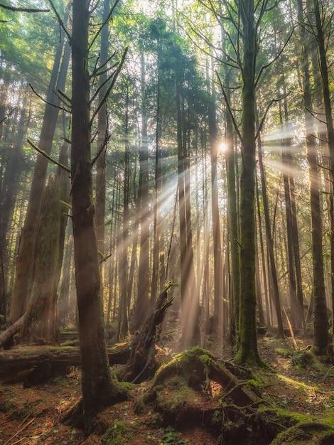 背の高い木が美しい森 無料写真