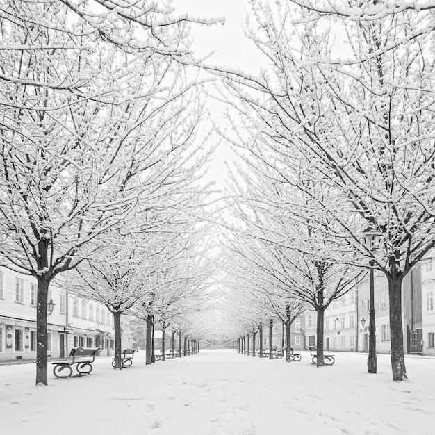 Снежное дерево на острове кампа, прага Premium Фотографии