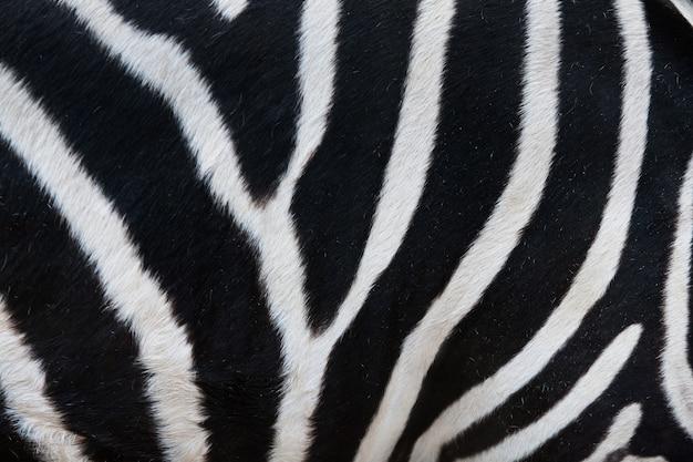 シマウマの毛皮の縞のクローズアップ Premium写真