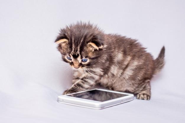 Маленький котенок играет на мобильном телефоне. мобильная связь. набрать номер телефона Premium Фотографии