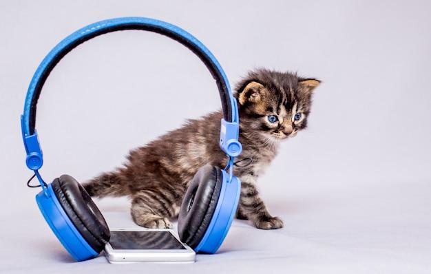 Маленькая кошечка возле наушников и мобильного телефона. слушать классическую музыку Premium Фотографии