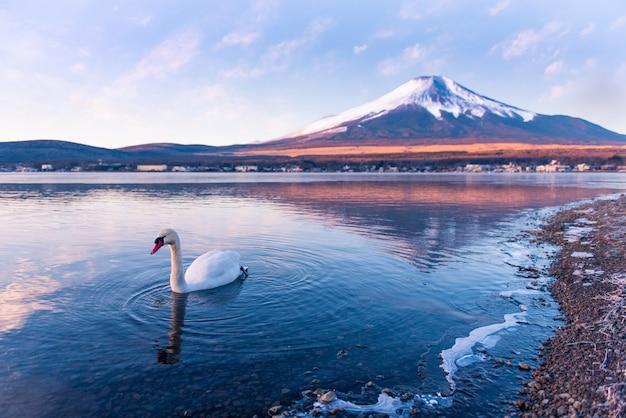 Лебедь в озере яманака с горы фудзи Premium Фотографии
