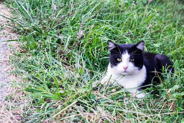 猫は草の中を這う。猫が横たわっている Premium写真