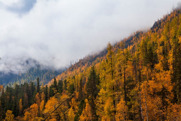 黄金のカラマツと山の秋の風景。カナダ。 Premium写真