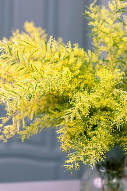 春のミモザの花。春のシーズンのコンセプトです。 Premium写真