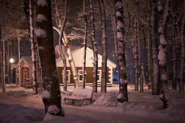 Зимний снег ночной парк Premium Фотографии
