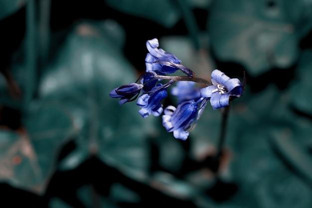 Фиолетовый цветок в объективе смещения наклона, нерезкость предпосылки селективного фокуса Premium Фотографии