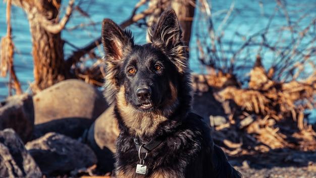 動物のセレクティブフォーカス、被写体にセレクティブフォーカス、背景ぼかし、時間の間に自然の素晴らしい素晴らしい新しい美しく写真 Premium写真