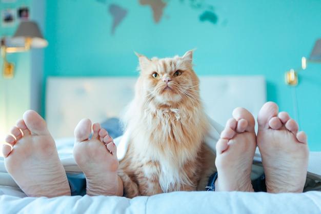 カップルと一緒にベッドで飼い猫 Premium写真
