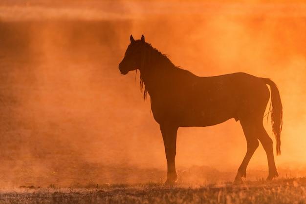 Дикая лошадь или мустанг на лугу на закате Premium Фотографии