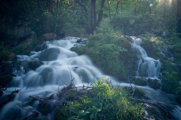 流れる水と美しい自然 Premium写真