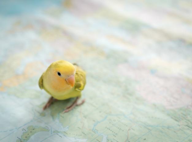 旅行のための地図上で検索かわいいペットの鳥 Premium写真