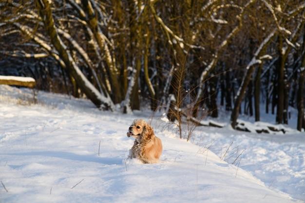 Спаниель на фоне снежного леса Premium Фотографии