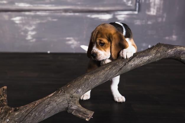 犬とドライブランチ Premium写真