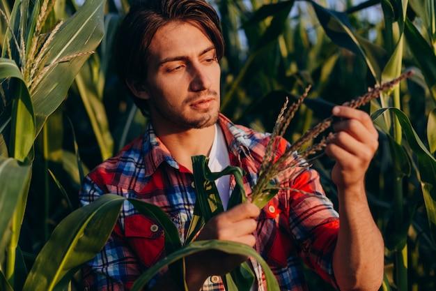 トウモロコシ畑の若い農学者が慎重に収量を管理し、植物に触れる Premium写真