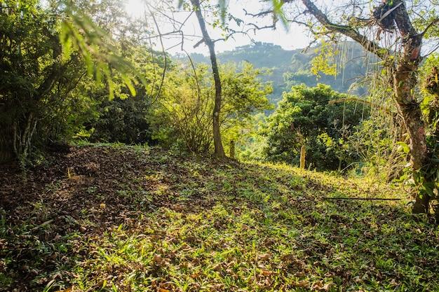 Холмистый зеленый пейзаж Бесплатные Фотографии